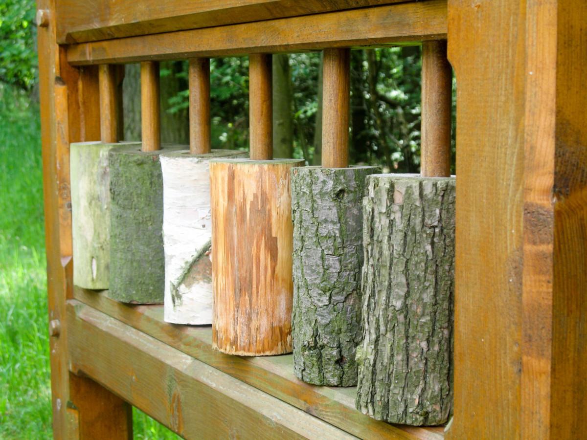 Lehrpfad: Holzarten kennen